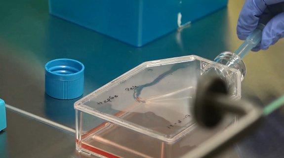 Un medicamento imita a un virus y ataca a células con cáncer